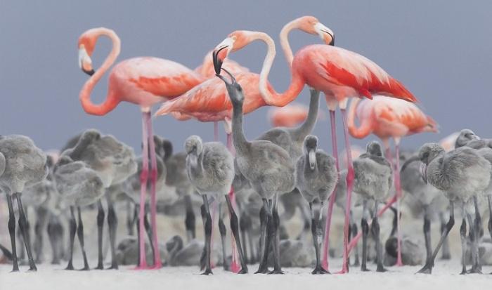 2-е место в категории «Дикая природа» занял мексиканский фотограф Алехандро Прието (Alejandro Prieto).