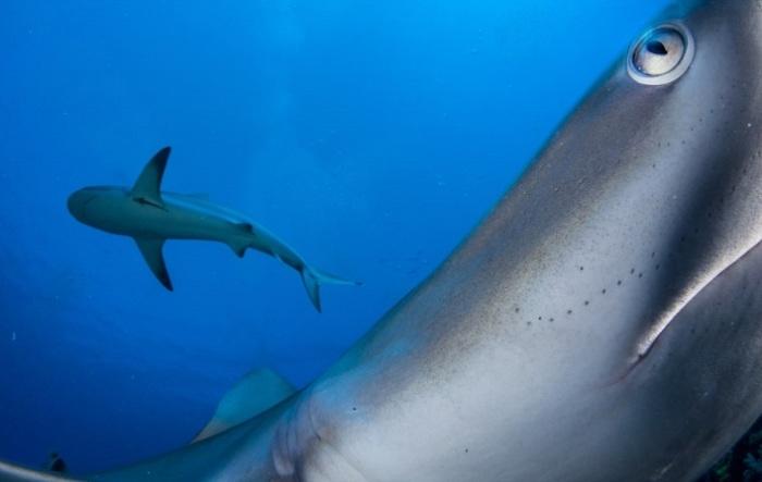 Обладатель 2-го места в категории «Под водой» - канадский фотограф Шейн Гросс (Shane Gross).