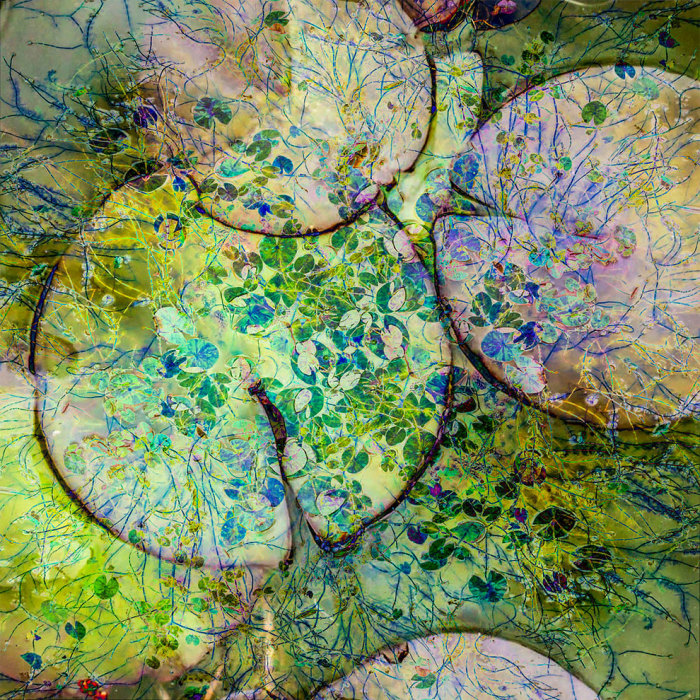 Несколько фотографий лилий, наложенных друг на друга. Автор фотографии: (Cathryn Baldock) Кэтрин Белдок.