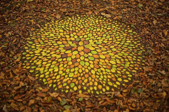 Сложный ленд-арт, созданный из множества разноцветных опавших листьев бука.