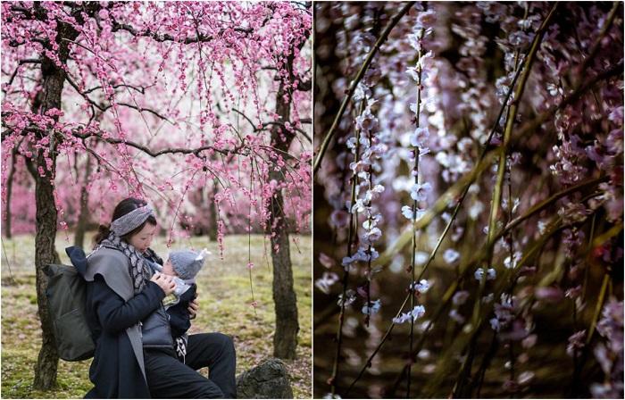 Японская весна раскрывает свои цветущие объятия.