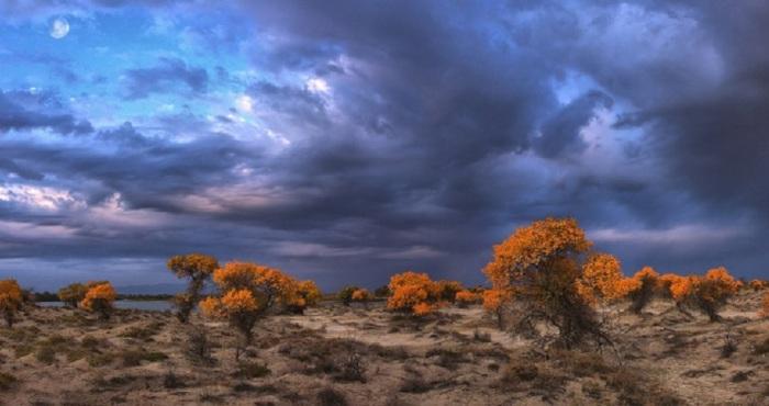 Сурова осень в степи: «Тучи серые, хмурые, дождь недалек...».