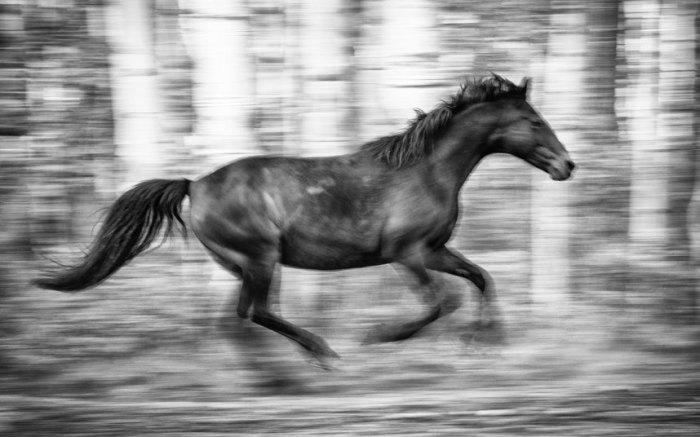 Лошадь, парящая в воздухе.