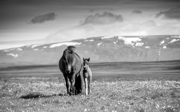 Лошадь с жеребёнком на фоне идеалистического пейзажа.