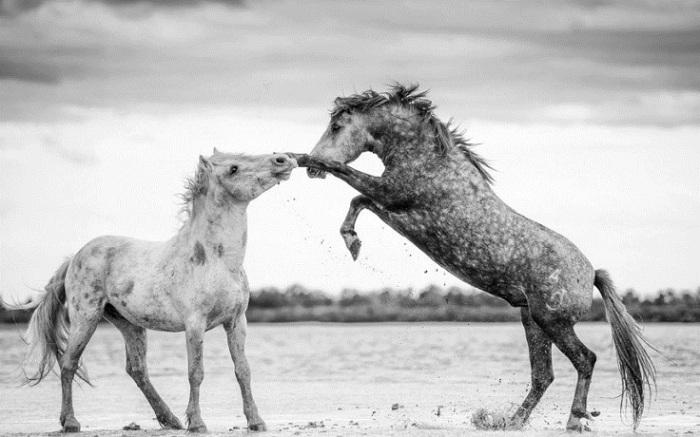 Поразительная красота и грациозность лошадей.