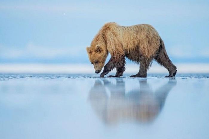 Кевин Морганс (Kevin Morgans), Национальный парк Озеро Кларк, Аляска.