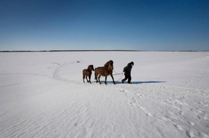 Гена Навюхов переправляется на лошади через замерзшую реку Сосьву недалеко от деревни Демино.