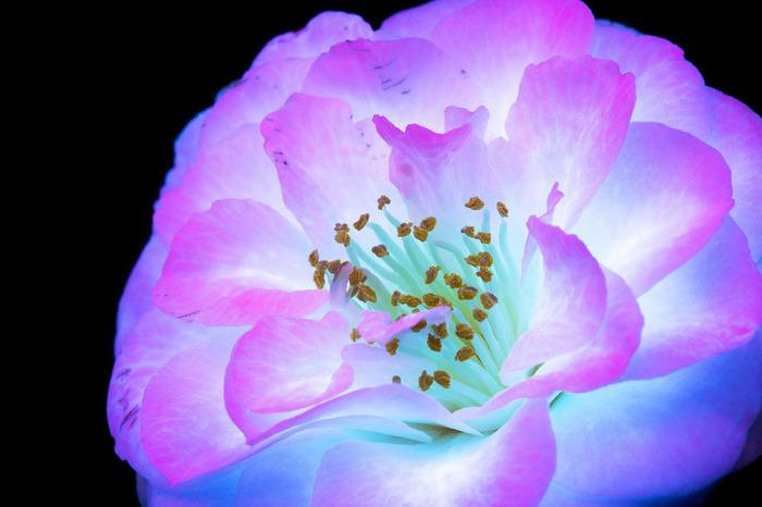 Процесс такой съемки позволяет выделить флуоресцентное свечение в растениях за счёт использования УФ-света высокой интенсивности.