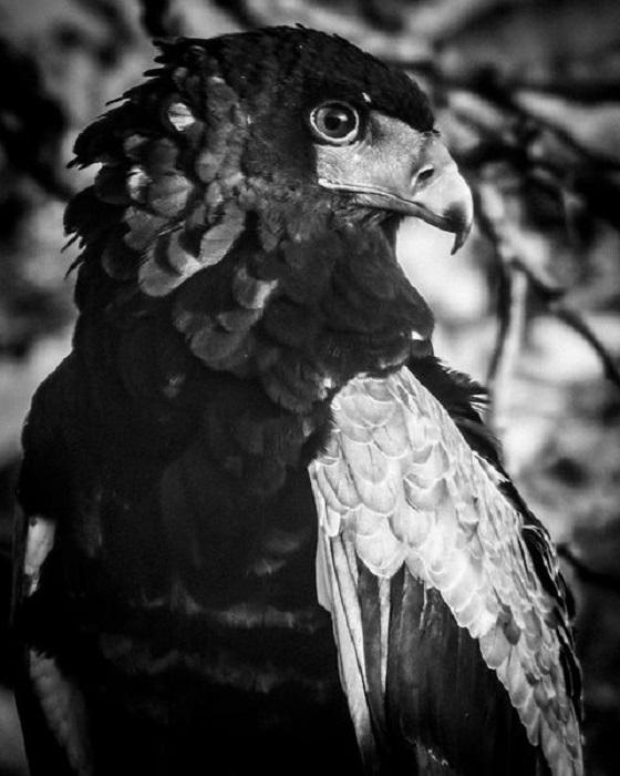 Беркут - самая большая птица из орлиного племени.