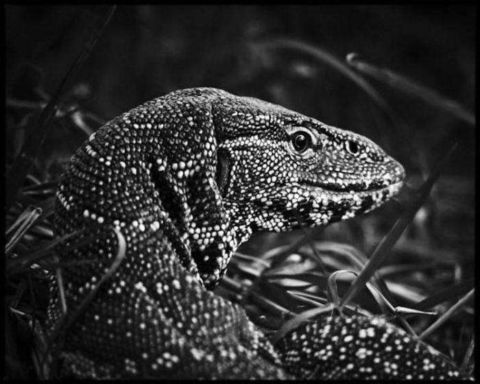 Ящерицы – самая многочисленная группа класса Рептилии.