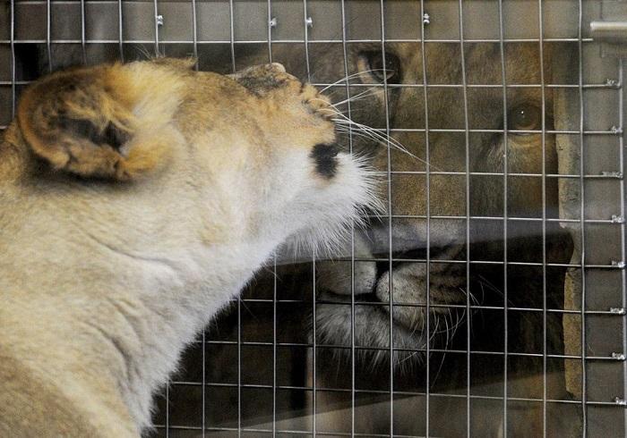 Животные в клетке в зоопарке в Санкт-Петербурге.