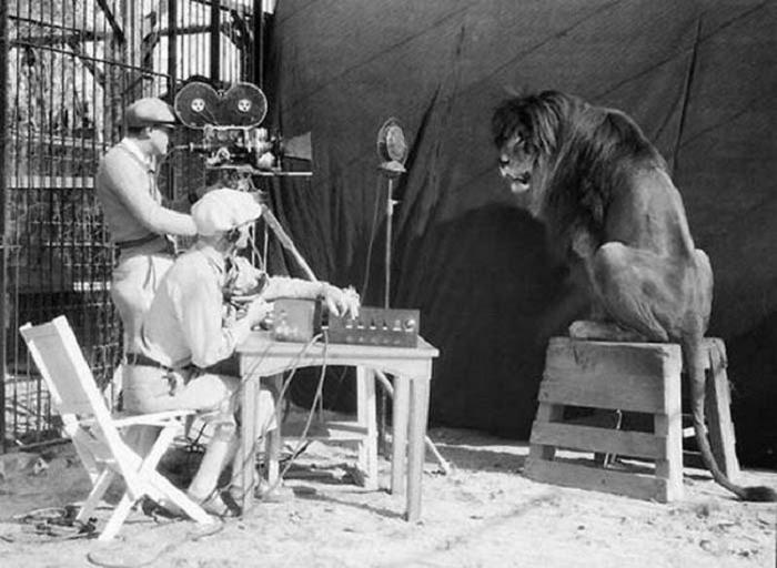 Съёмки льва для Metro-Goldwyn-Mayer, 1929 год.