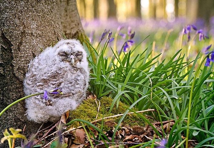 Совёнок в графстве Хэмпшир. Фотограф Виктория Джонс (Victoria Jones).