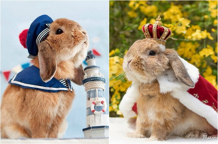 Японский кролик в невероятно модных костюмах.