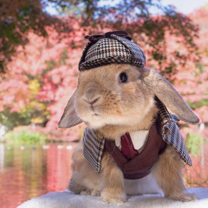 Первый кролик в мире, у которого есть не только свой гардероб, но еще личный фотограф и личный стилист.