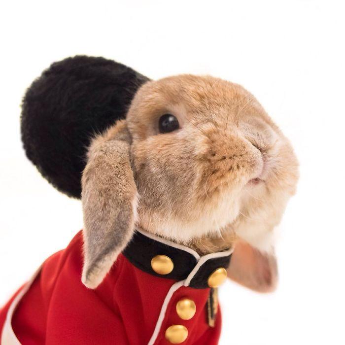 Кролик-модник, который очень любит одеваться в разную одежду.