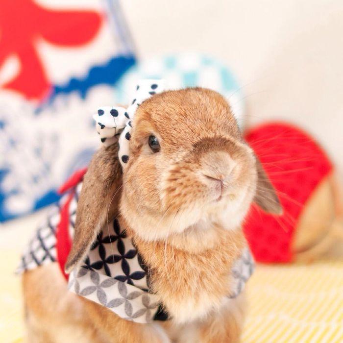 Безупречный вид кролика.