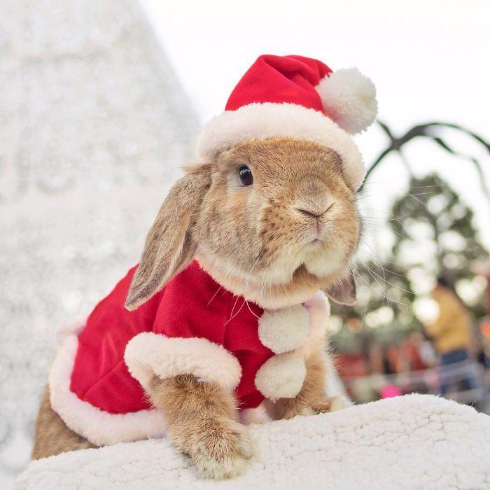 Поздравления к новому году кролика