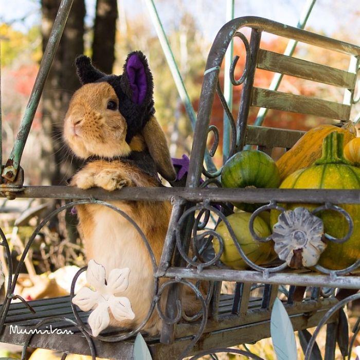 Кролик подражает с обожаемый ощущением равновесия.