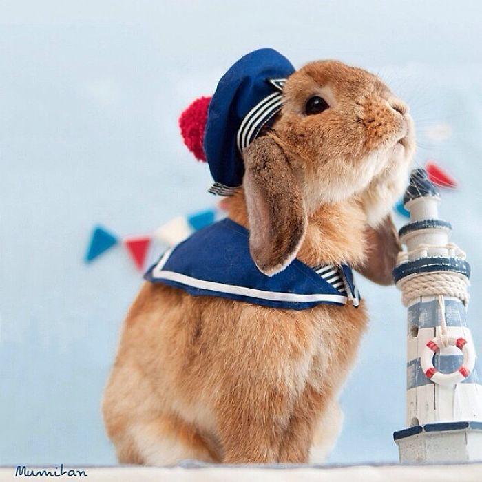 Пуй-пуй признан самым стильным кроликом.