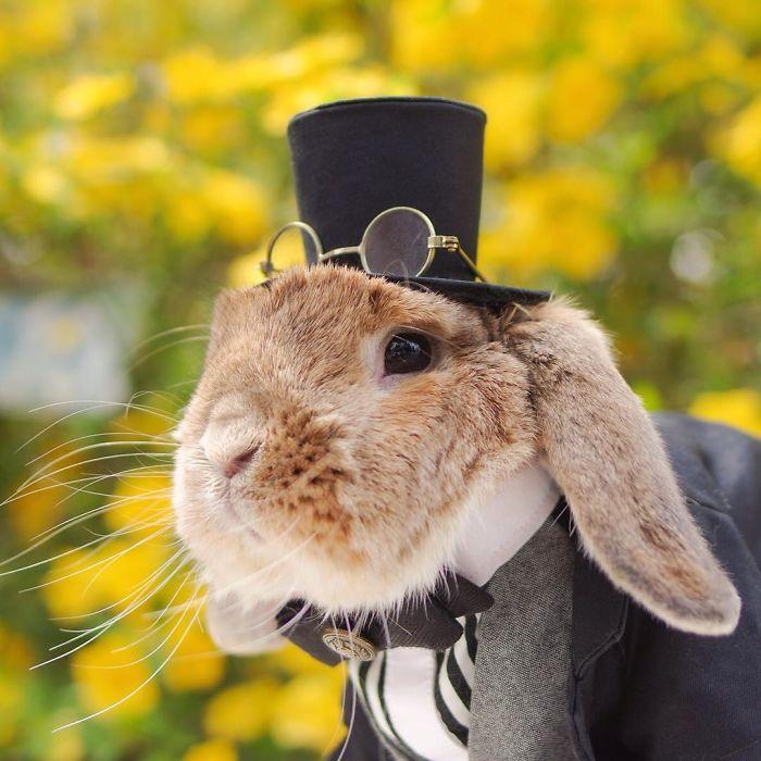Картинки по запросу Пуй-пуй признан самым стильным кроликом