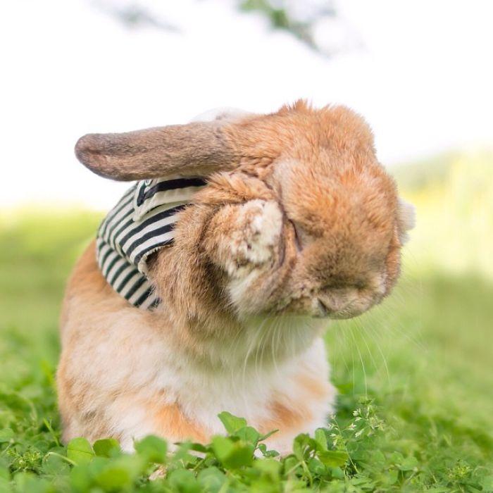 Самый стильный кролик любитель побаловаться во время съёмки.