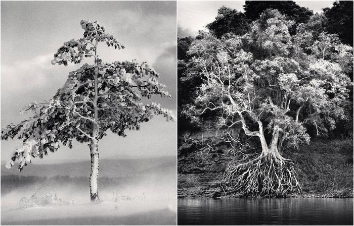 Волшебные деревья среди монохромных пейзажей Майкла Кенны.