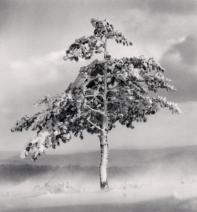 Главными персонажами монохромных фотографий Майкла Кенны часто становятся различные деревья.