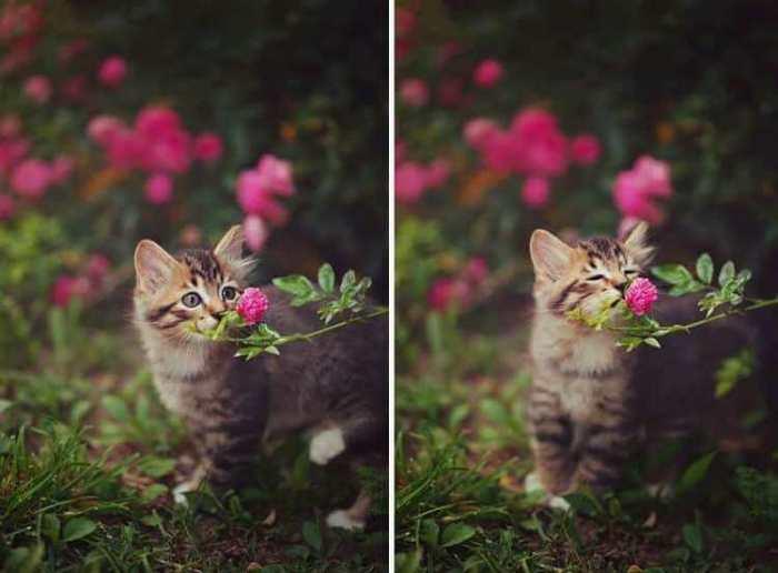 Зачем же люди срывают такую красоту, если можно просто любоваться и нюхать.