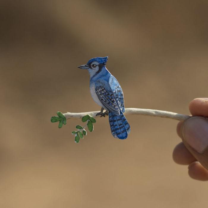 Певчая птица.