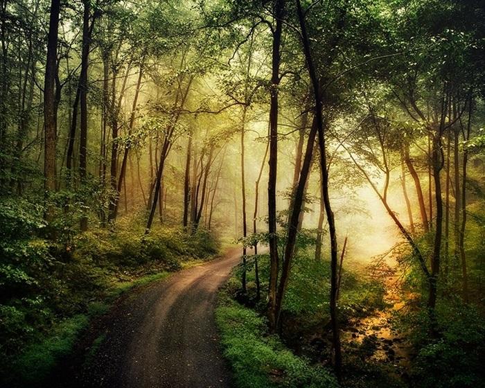 Лесная туманная дорога. Фотограф Ларри Лефевра.