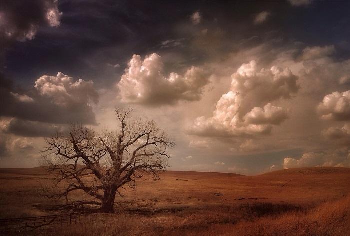 Одиноко стоящее дерево осенней порой. Фотограф Уэйн Грир.