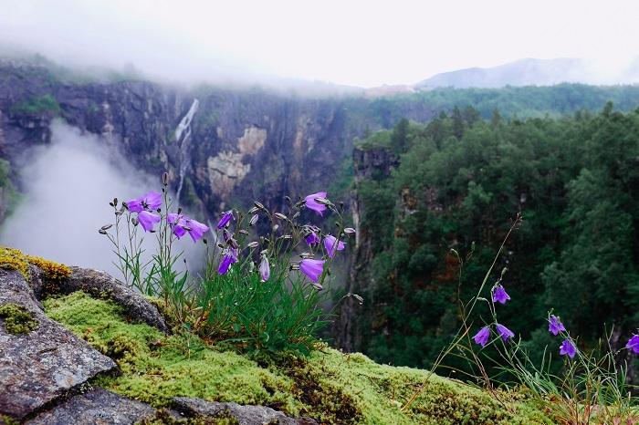 Первые весенние цветы. Фотограф Атле Ронинген.