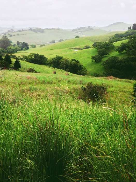 Удивительная красота зелёных холмов...Фотограф Али Жардин.