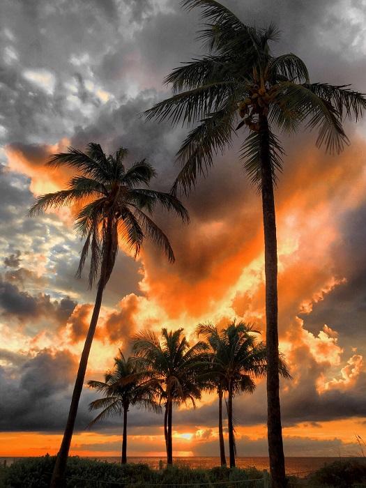 Потрясающая цветопередача снимка, достигнута с помощью мобильного телефона флорентийцем Энди Ройстоном.