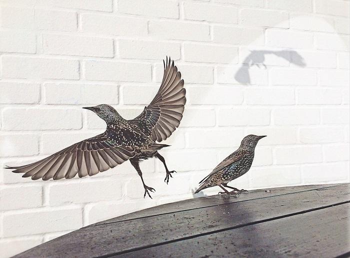 Игра с тенью. Британский фотограф Дэвид Крэйк.