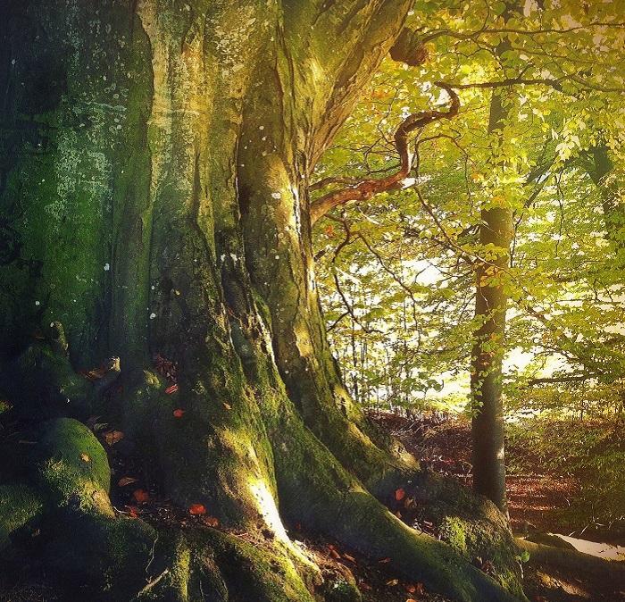 Тонкая душа художницы Марико Клуг видит прекрасное в обычном.