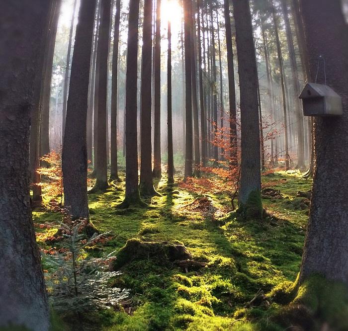 Лесная таинственность возле Эберсберг в Верхней Баварии, Германия. Фотограф Марико Клуг.