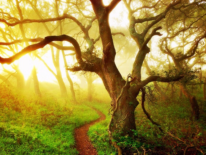 Лес прекрасен неукротимой, мощной, сказочной красотой. Фотограф Али Жардин.