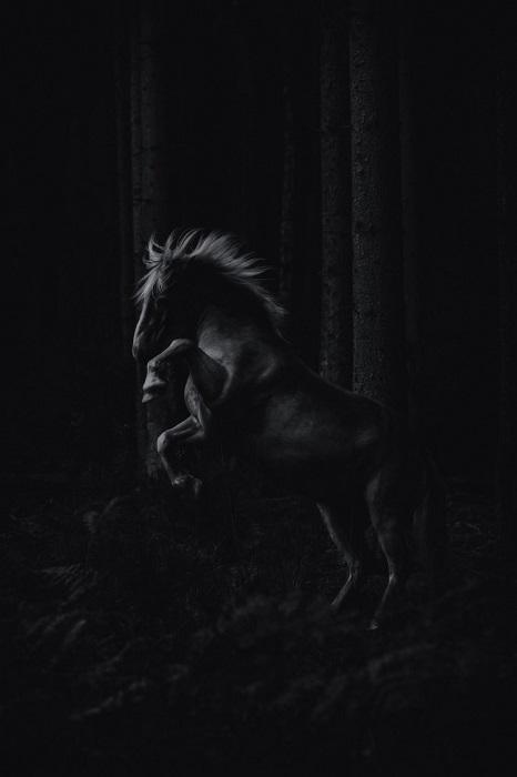 2-е место в категории «Файн-арт» присуждено фотографу Пиа Фабиенке (Pia Fabienke) из Германии, запечатлевшему вздыбленную лошадь среди деревьев.