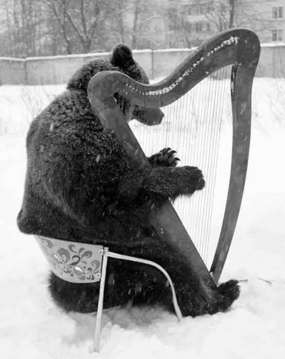 Бурый мишка - музыкант.