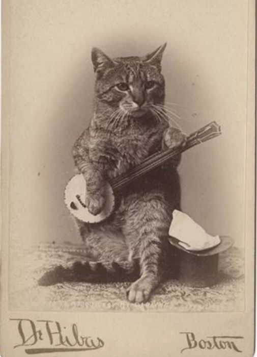 Кот, сочиняющий музыку...