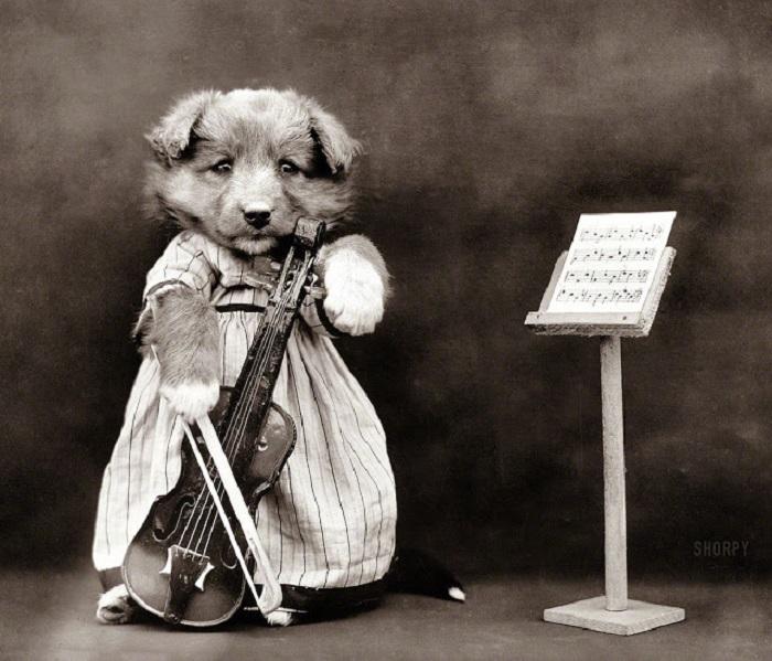 Начинающий скрипач, разучивающий новую композицию.