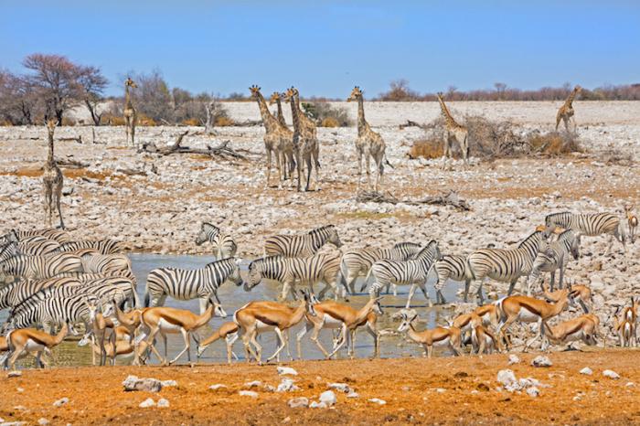 Природный заповедник на севере Намибии с численностью животных около 114 видов.