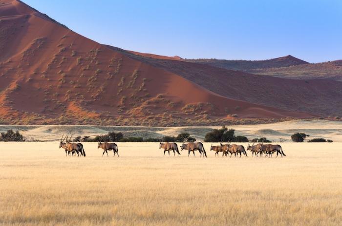 Намиб-Науклюфти большой национальный парк в Африке и четвертый по величине в мире.