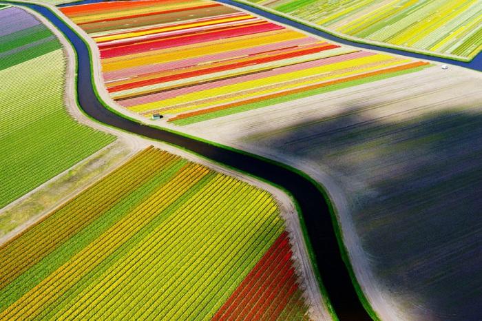 Поля тюльпанов в Нидерландах, Голландия с высоты птичьего полета. Фотограф - Андерс Андерссон (Anders Andersson).