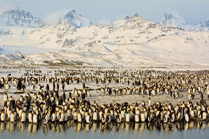 Антарктические пингвины весят в полтора раза меньше и предпочитают жить на скалах, поближе к небу. Фотограф: Shivesh R.