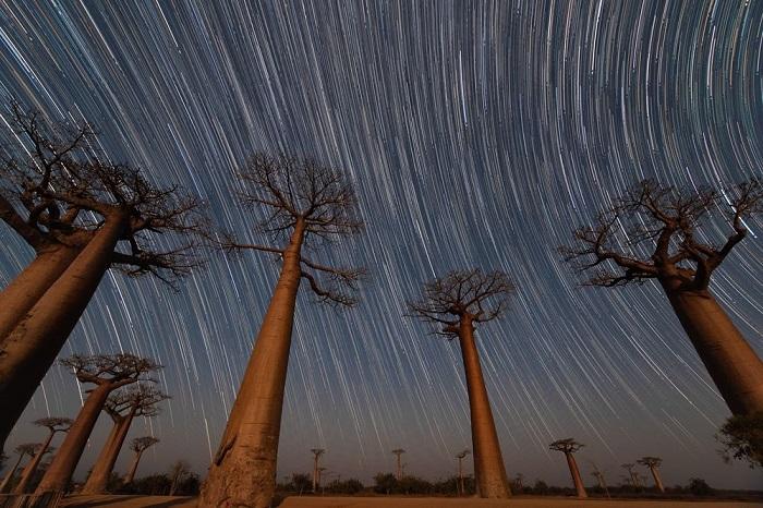 Категория «Места/ Выбор аудитории» - американский фотограф Мэгги Мачински (Maggie Machinsky) со снимком ночного неба над 800-летними баобабами.