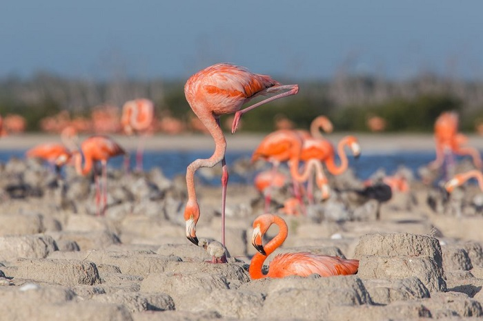 Категория: «Дикая природа». Автор снимка с птенцом в окружении заботливых родителей-фламинго – мексиканский фотограф Фернанда Линидж (Fernanda Linage).
