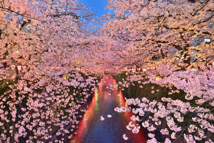 Цветущая сакура над рекой. Автор фото - Мотоки Уемура (Motoki Uemura).